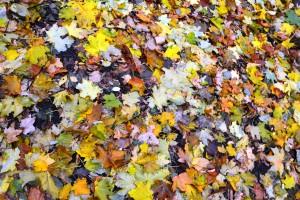 листя