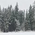 Ялинки зима